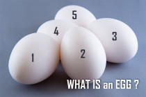 WHAT IS an EGG?
